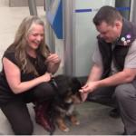 Train Operator Rescues Lost Dog